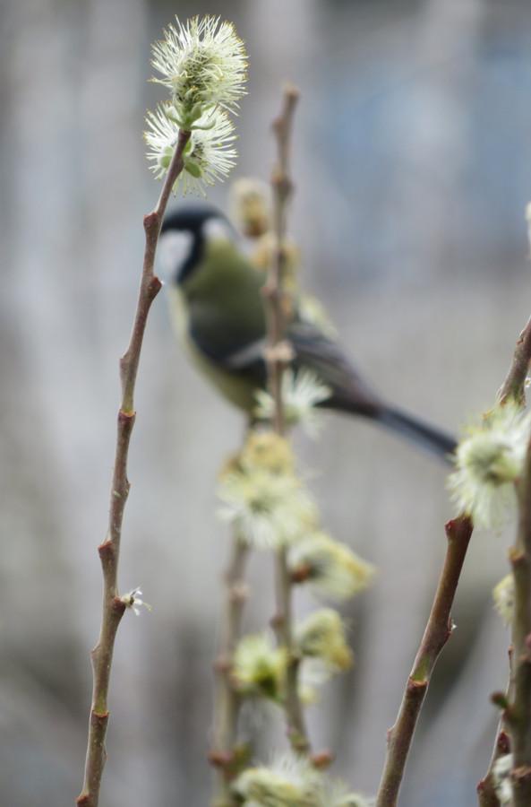 Весна в Озерске1.JPG