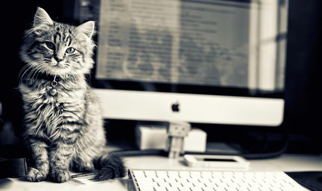 7876760-R3L8T8D-650-office-cat