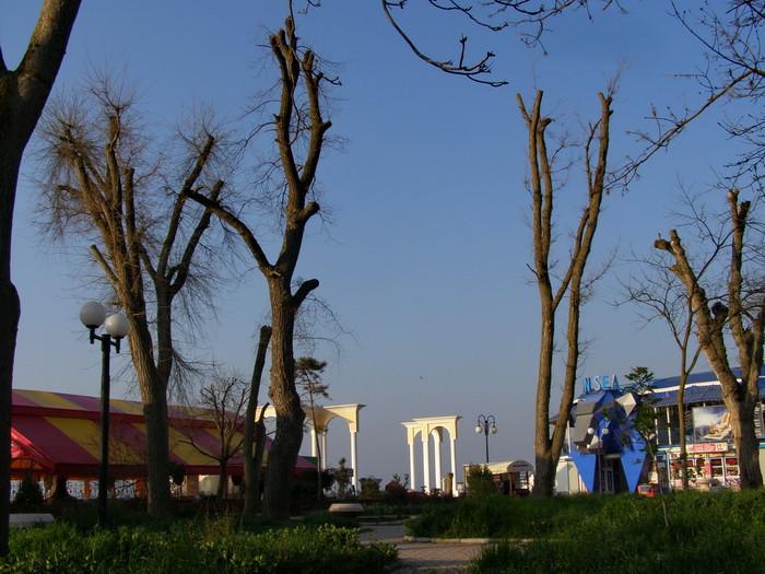 деревья  8
