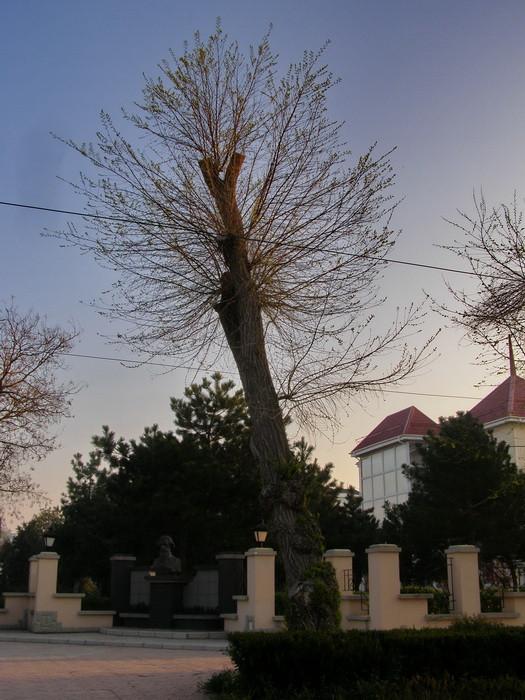 деревья 9