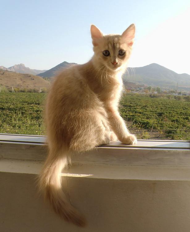 Палле на окне