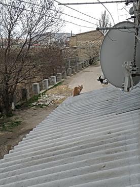 Палле на крыше  2