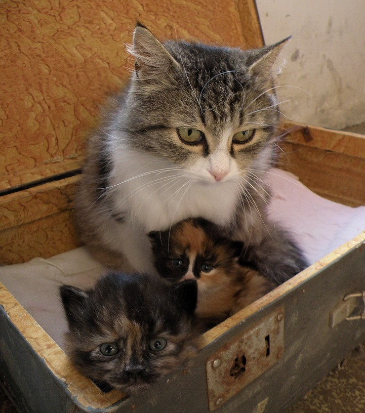Зульфия и котята