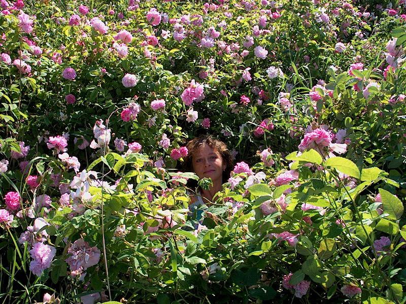 я в розах