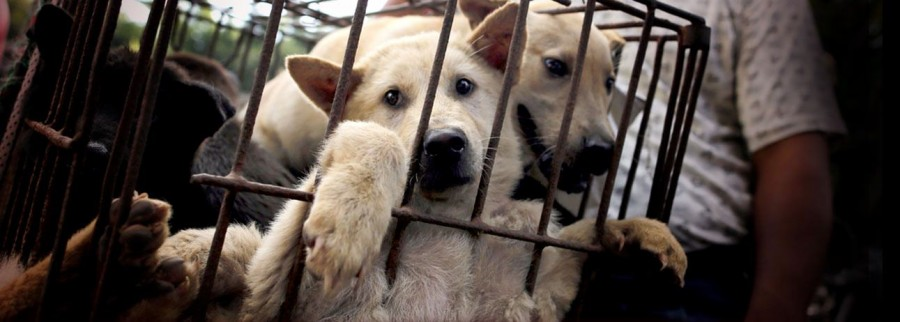 campaign_yulin_dogs