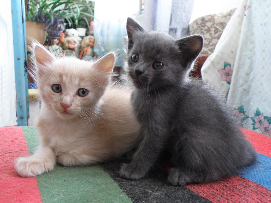 Палле и Мышка