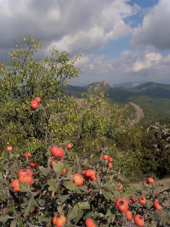 пейзаж с боярышником