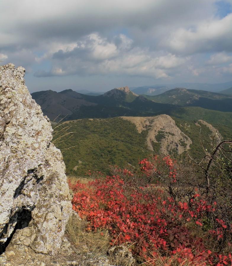 скумпия в горах