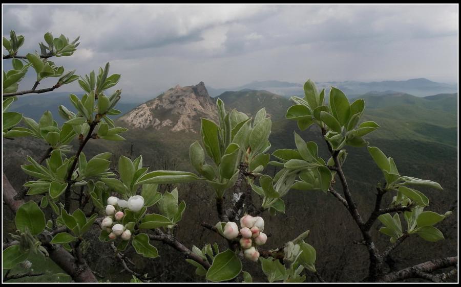 пейзаж с зацветающей грушей