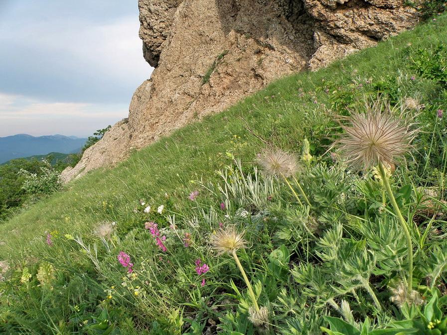 разноцветье 2