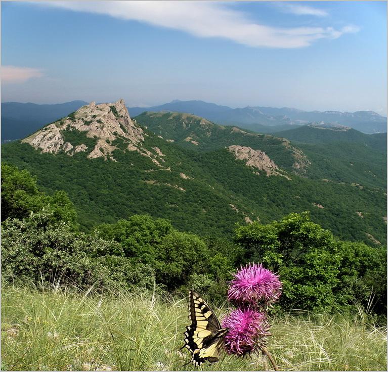 пейзаж с весенней бабочкой