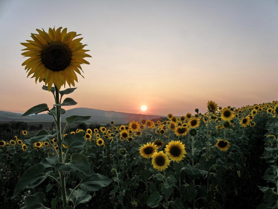 наместник Солнца на Земле