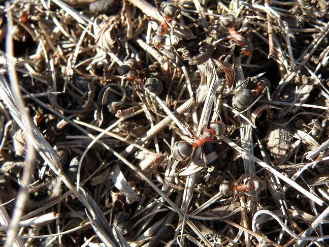 11 муравьи