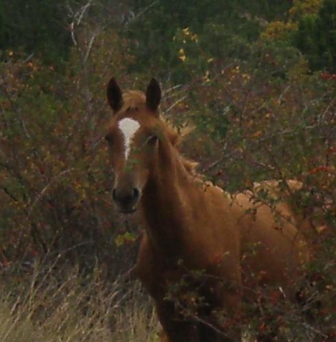 лицо лошади