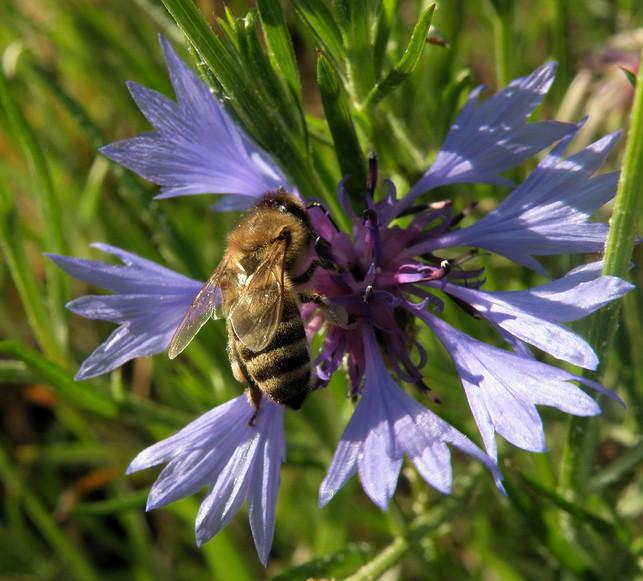 с пчёлкой