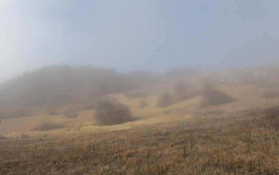 1 всё в тумане