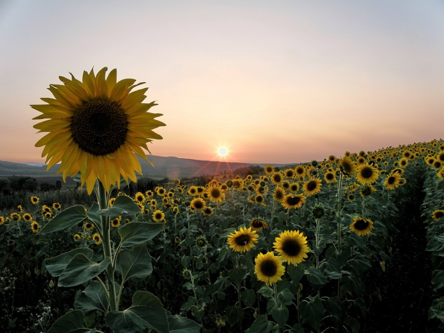 8 Король-Солнце