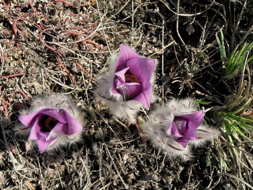 три птенчика