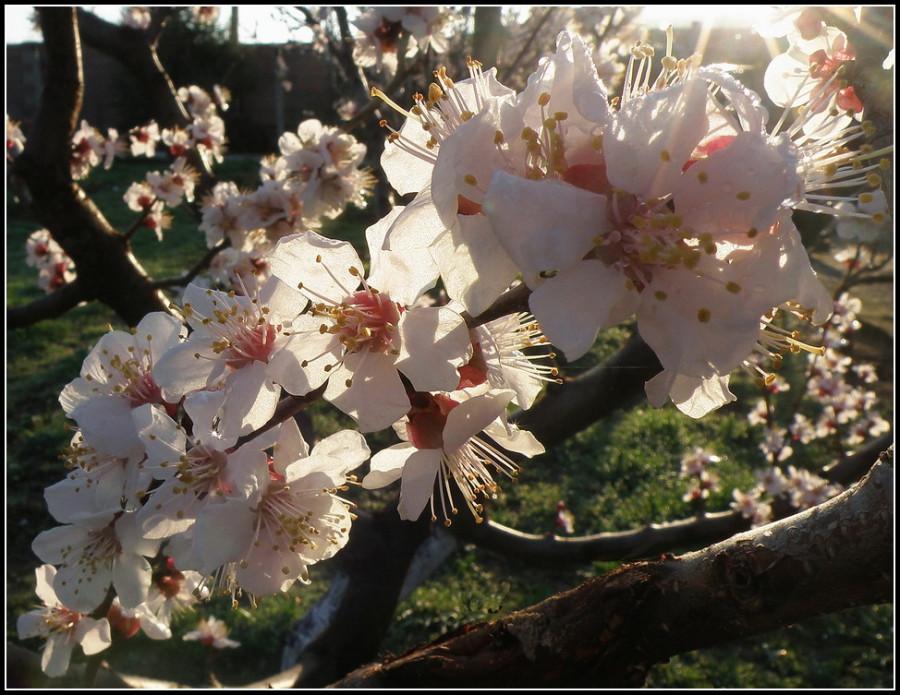 цветение-свечение