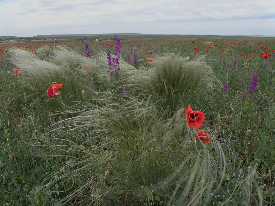 12 буйные травы