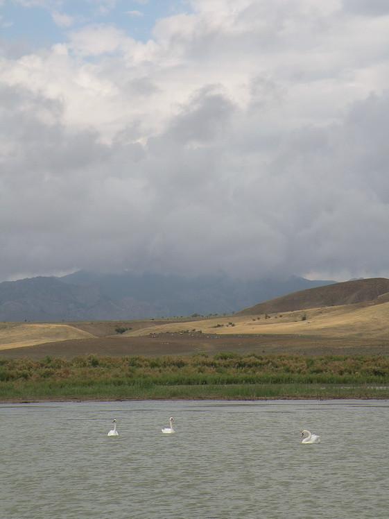 3 лебеди