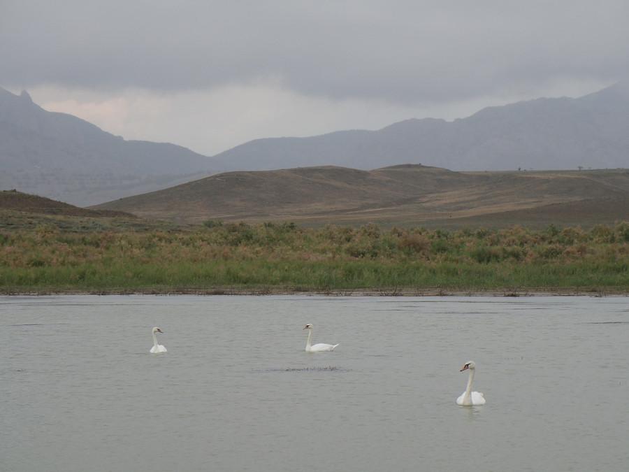 4 на лебедином озере