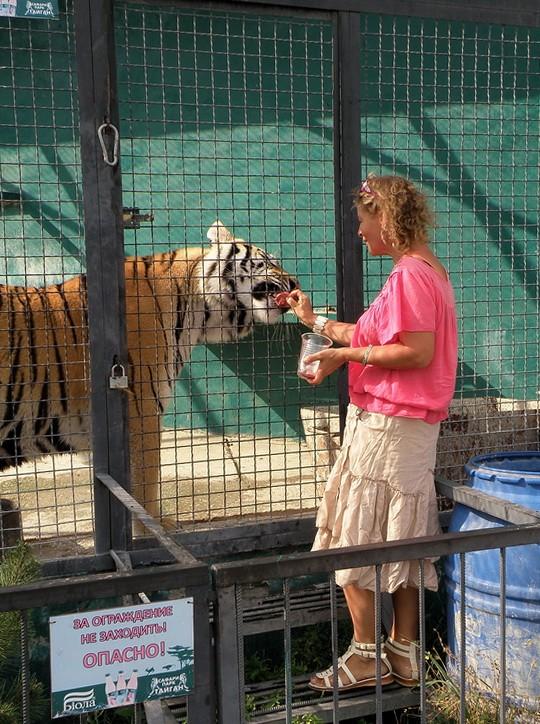 кормление тигрицы