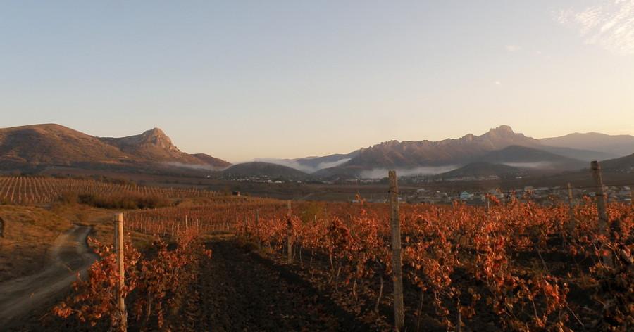 1 виноградники