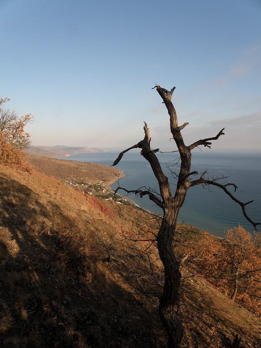 канака дерево