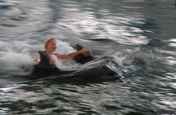 я с дельфинами!