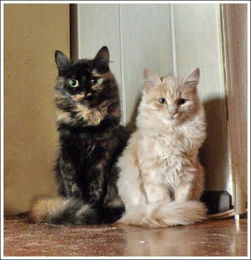 Лючия и Палле