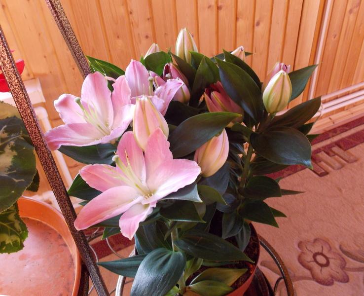 0цветы1