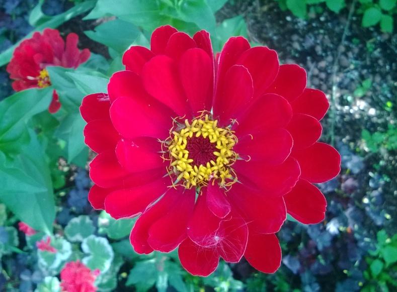 0цветок1