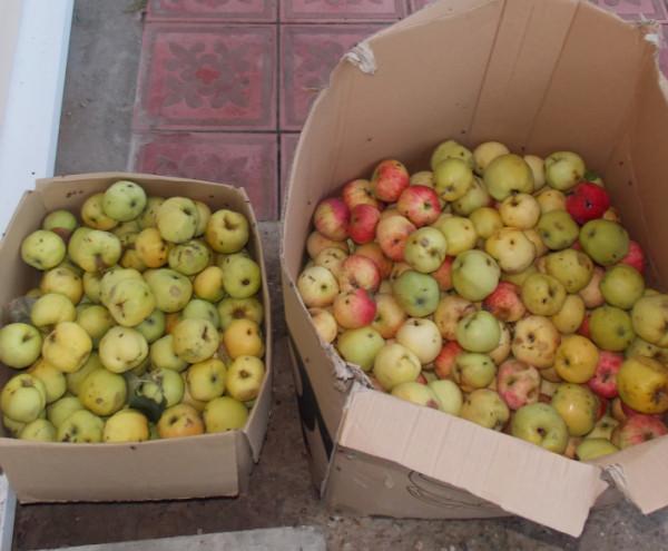 Букет, печь, яблоки