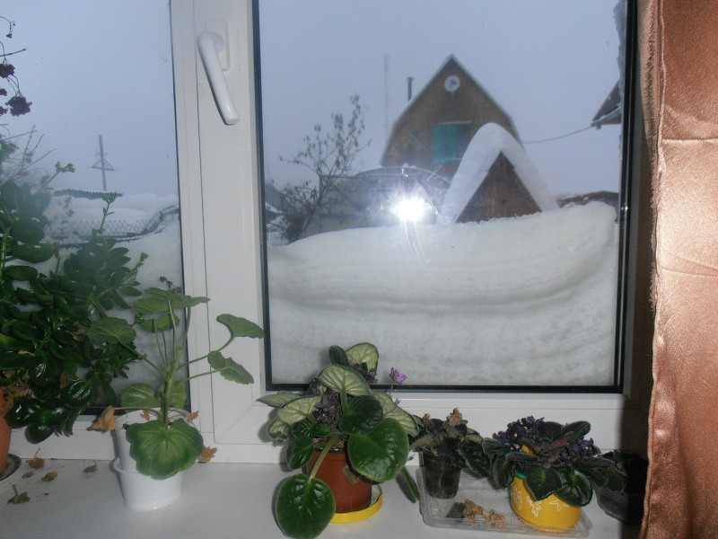0011за окном1