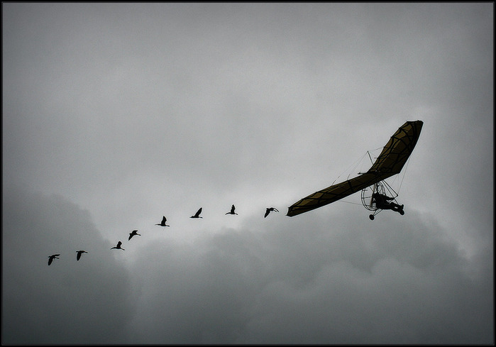Летят журавли. Милинкович Марина