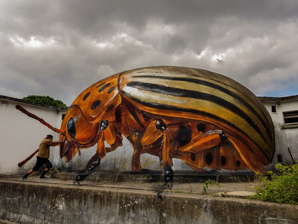 huge-colorado-potato-beetle-street-art-odeith.jpg