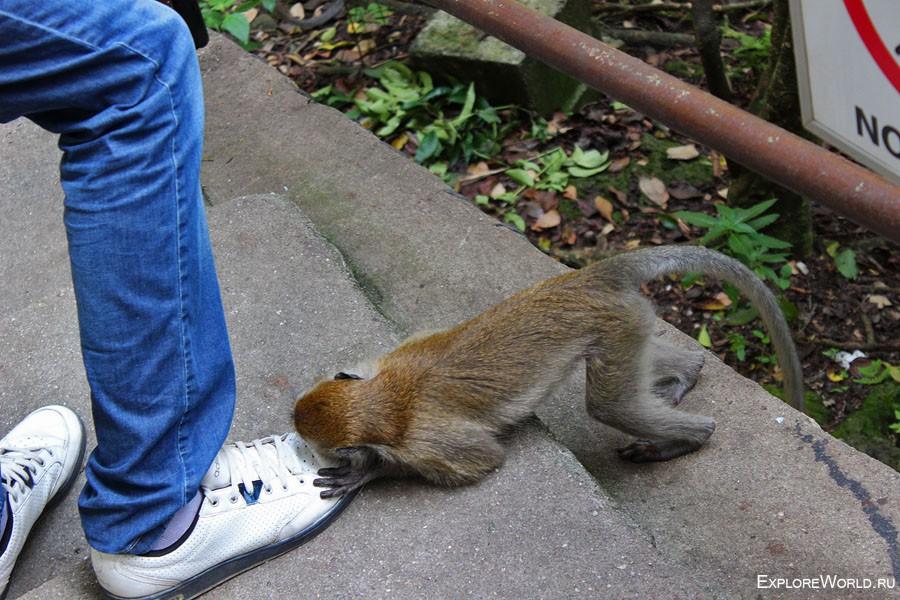 monkey_adidas