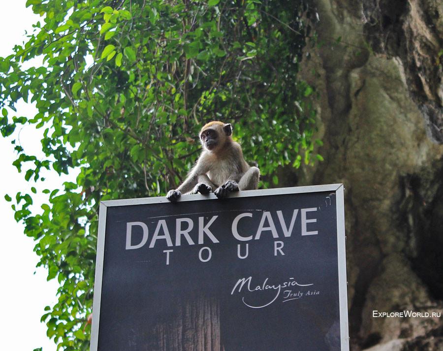 monkey_dark_cave
