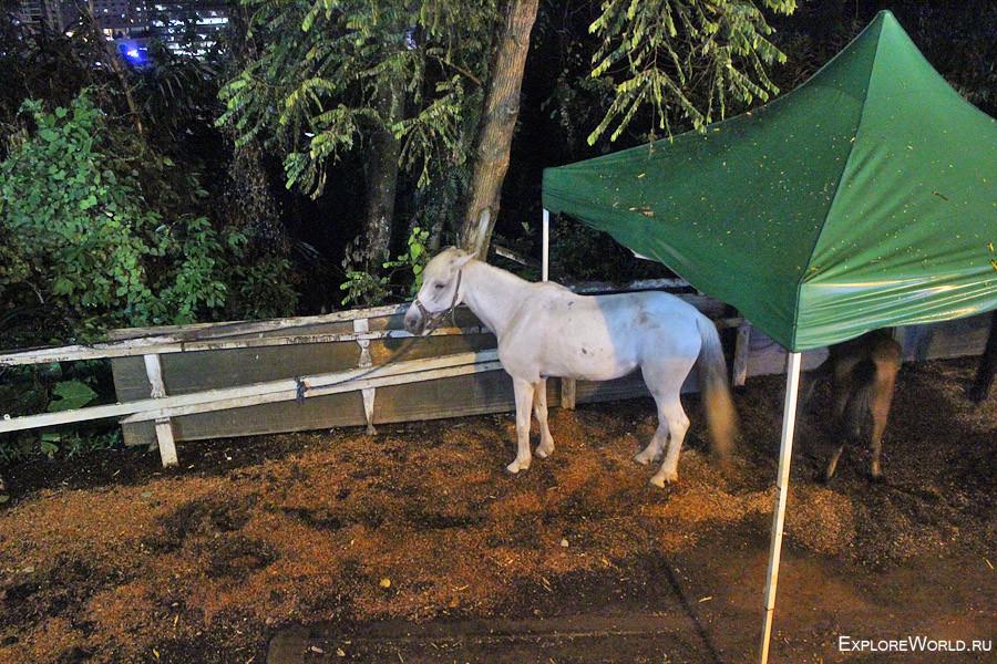 horse-menara