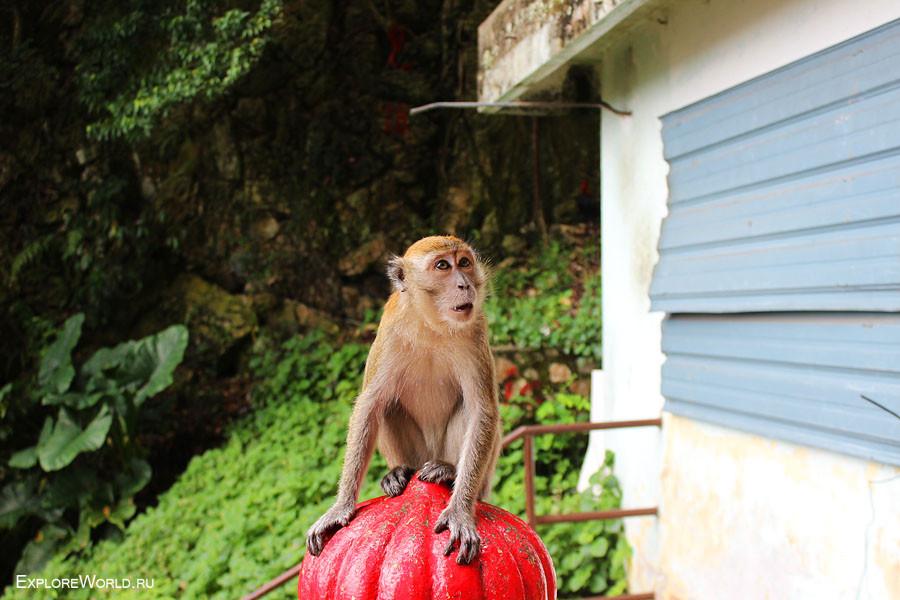 monkey_shock