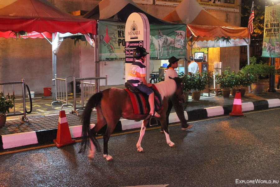 menara-horse