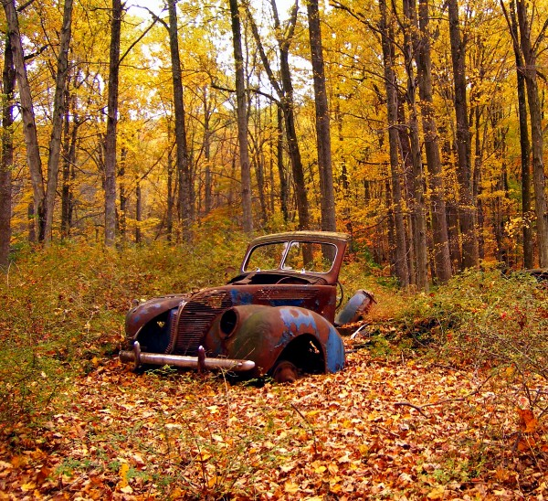 tree-forest-wilderness-car-sunlight-leaf-rust-foliage-rural-autumn-abandoned-season-trees-creativecommons-ruins-deciduous-newjersey-warrencounty-oldm…