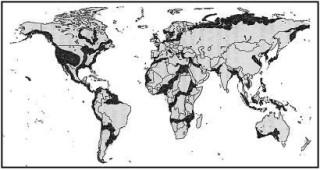 Карт всемирного потопа 2012