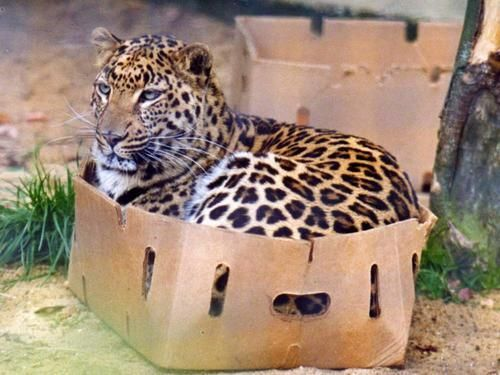 leopardbox