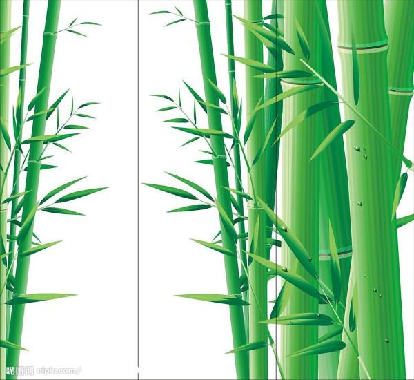 竹子-bamboo