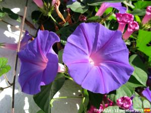 SPA_Flora_11