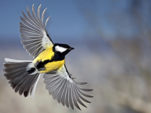 Animals_Birds_A_bird_in_flight_032727_29