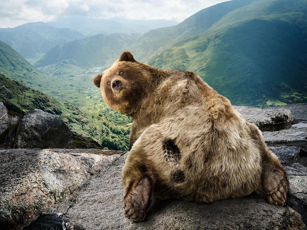 "Картинки по запросу ""медведя пнули"""""