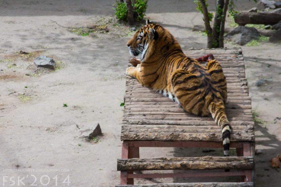 Mykoiv_zoopark_06